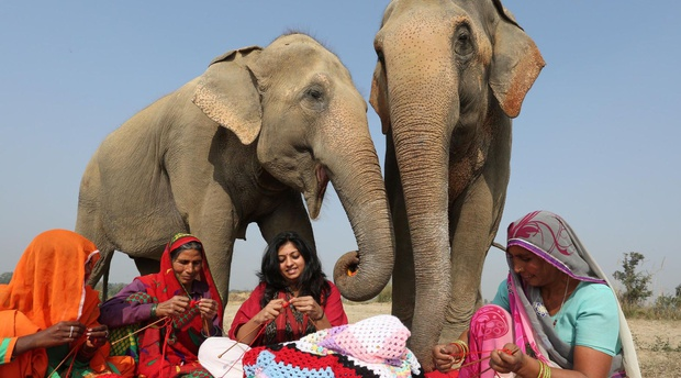 Widlife SOS Elephant Sanctuary, Mathura, India