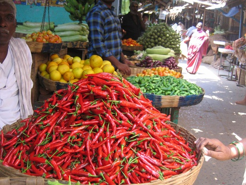 Red hot chilli peppers, India
