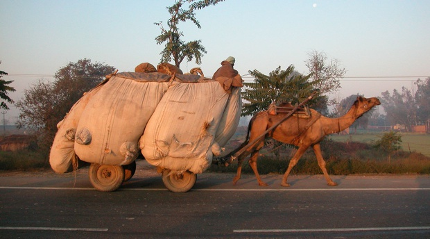 Camel cart, Rajasthan, India