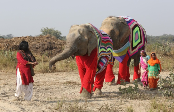 Wildlife SOS Elephant Sanctuary, Mathura, India